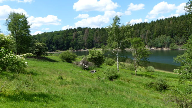 Wupper-Talsperre Ostufer südlich Hammerstein nach der Beweidung durch Schafe (Foto: Biologische Station Oberberg, Manuela Thomas)